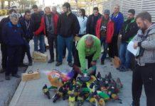 Colombicultura Diario de Alicante
