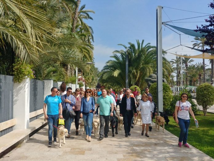 Perro Guía Diario de Alicante