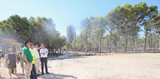 verde Diario de Alicante