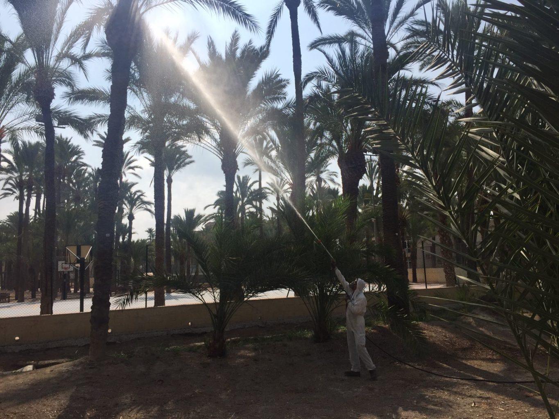palmeras Diario de Alicante