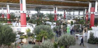 IFA Diario de Alicante