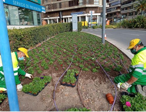 Operarios replantan un jardín