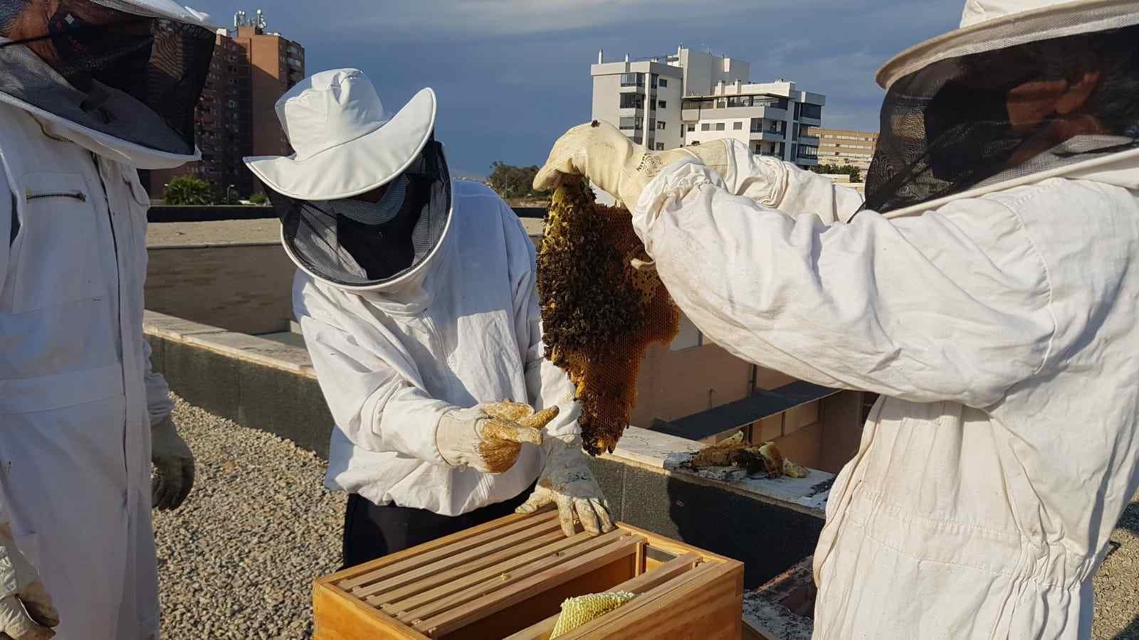 panel de abejas