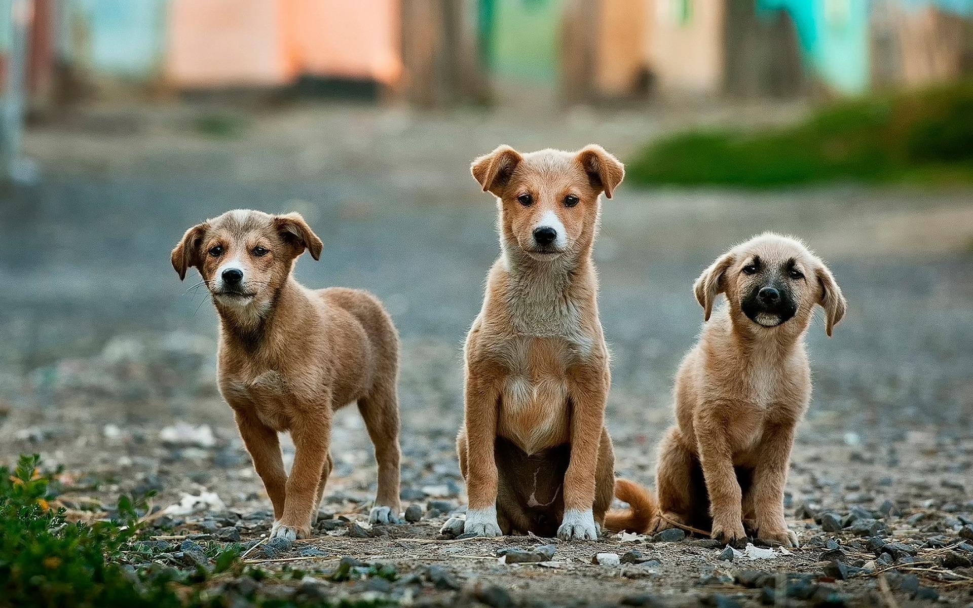 Perros abandonados en la calle