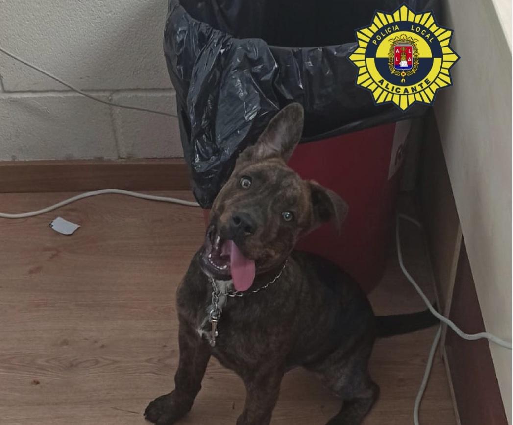 El perro rescatado por la Policía Local de Alicante
